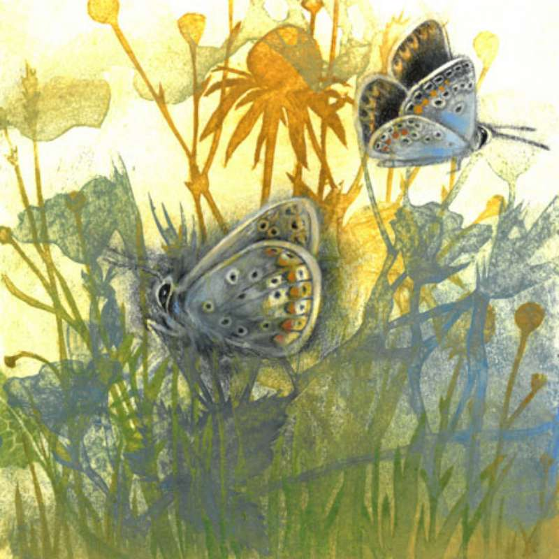 Meadow Butterflies 7/50